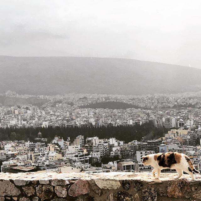 Acropolis 🐈